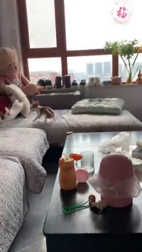 小兔子惊人的弹跳力~