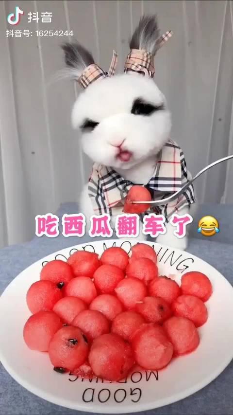怎么有这么暴躁的小兔兔哈哈哈哈哈哈