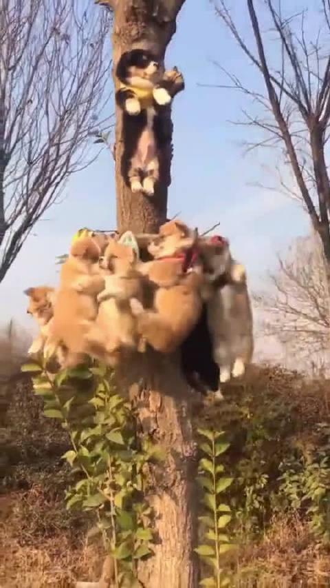 宠物来数数这个树上有几只狗狗,主人太坏了竟然把它们绑到树上