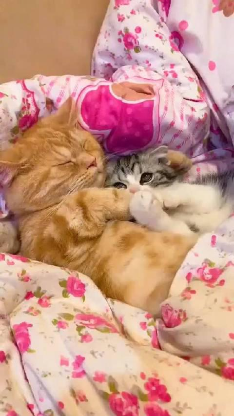 不只是猫有嫉妒心,是我有!