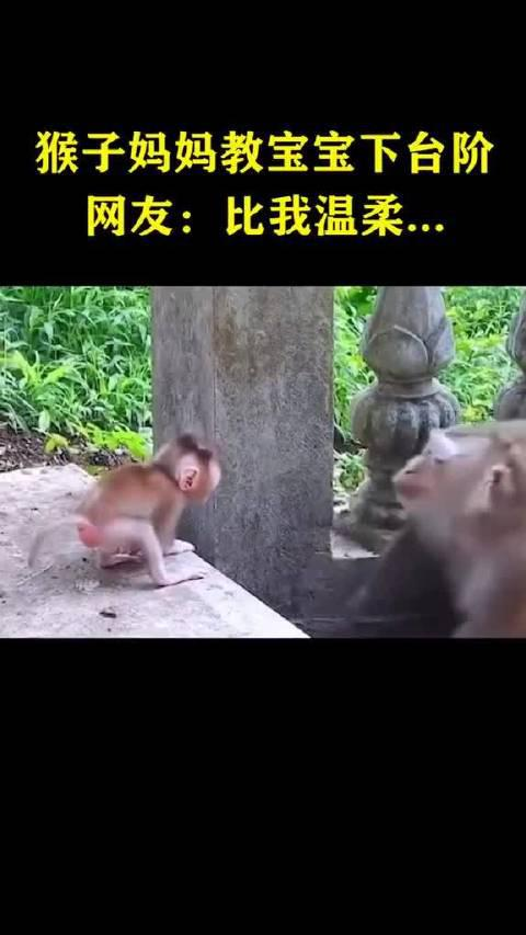 猴子妈妈教宝宝下台阶,耐心鼓励眼神温柔