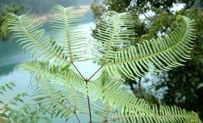 带你去了解乡下的野生蕨类植物