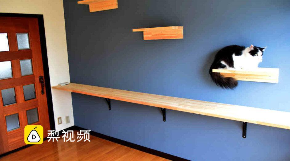 日本猫咪公寓租房送猫:还帮你一起养