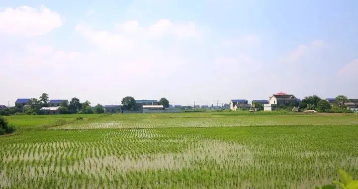 楚沩沃野多良田,耕农稻海奏丰歌——看宁乡高标准农田建设