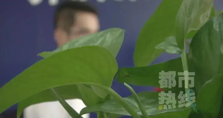 """西安一男厨师网恋被骗4万多,""""成熟""""女友竟是未成年人"""