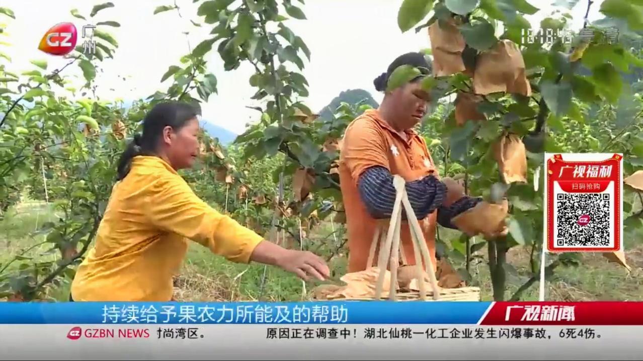 广视精选爱心助农,点亮晶宝梨的希望,不负贫困户的心血
