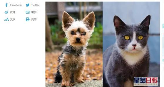 香港一猫一狗新冠病毒测试呈阳性,主人为确诊病例密切接触者