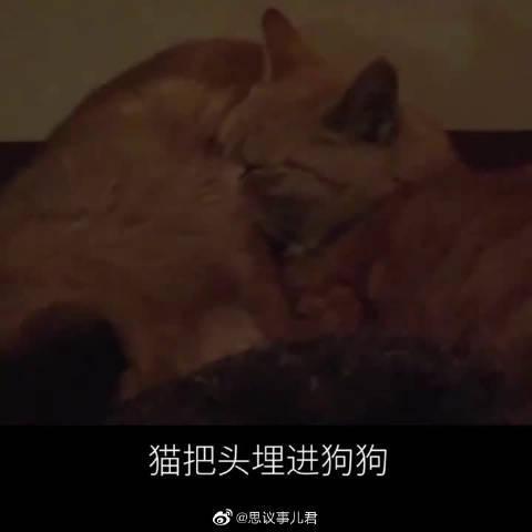 被遗弃的狗狗苦等主人6个月,认识了流浪猫互相取暖形影不离