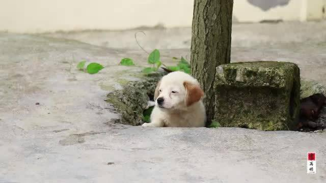 院子来了一只小狗崽,怎么赶都赶不走,待在院子就是不进家门……