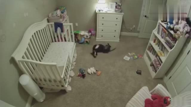 狗狗不被允许进入婴儿房,那天偷偷溜进去后被监控拍到原形
