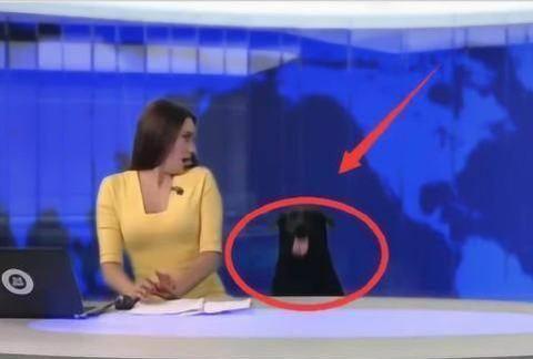 女主持人正在直播新闻,下一秒发生了什么?收视率首创第一