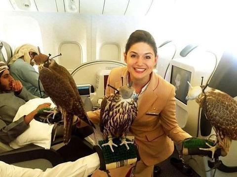 世界上最昂贵的宠物,迪拜的富豪们都拿它炫富,有钱真好!