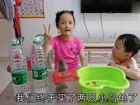 熙熙公园买两只小乌龟,姐弟俩第一次养宠物欢乐多!乌龟该咋养?