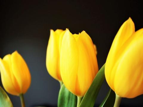 最近十天左右,缘分桃花等待不急,爱情非常合适的四个生肖!