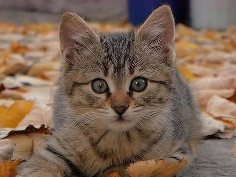 女孩想领养小猫,因为她喜欢他,但她一再被妈妈阻止