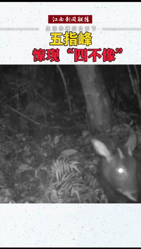 五指峰省级自然保护区位于江西省上犹县……