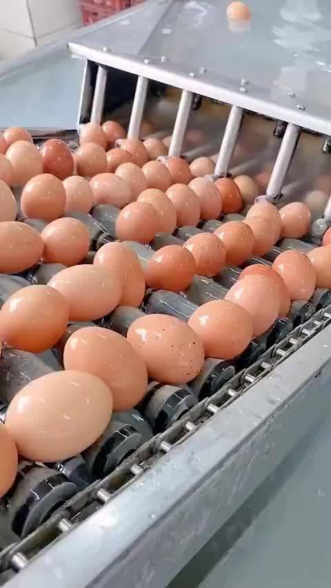 这是你喜欢的蛋黄派吗?