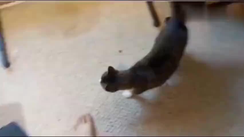因为猫咪喜欢往茶几上跳,所以主人把茶几上的玻璃撤掉了,然后……