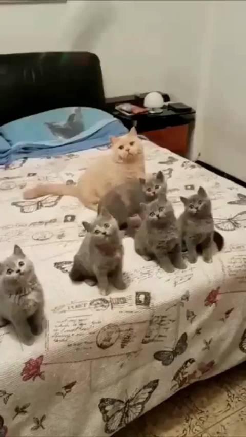 一家猫就要整整齐齐、一个都不能少~