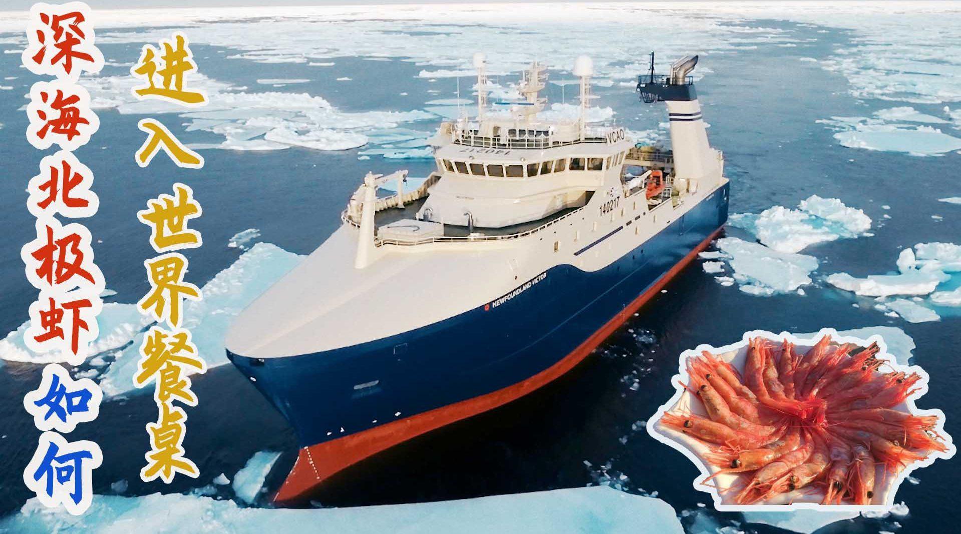 主要产于北冰洋和北大西洋海域,体形比暖水虾小,却更有营养