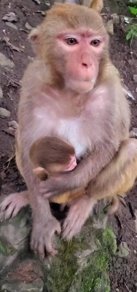 小猴子突然觉得自己喝的奶不香了