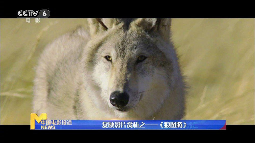 复映影片赏析之——《狼图腾》