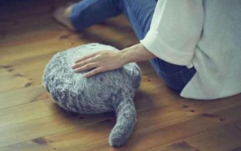 据说在日本爆炸的无头猫是养猫者的最爱,但是网民不敢做。