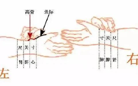 中医绝技:秘而不宣的脉诊,能预知疾病的脉象!