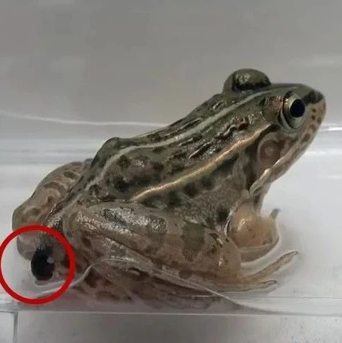 """被青蛙吃掉,还能活着从""""后门""""逃出来?!这求生技能太鬼畜了吧!"""