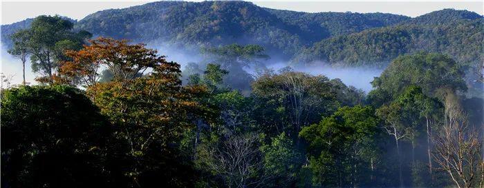 热带雨林景观 邱开培 摄