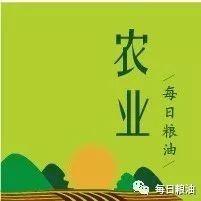 河南、河北小麦价格疯狂上涨 可苦了还没采购新粮的粮库