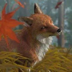 对马岛上的狐狸已经被撸了880万次