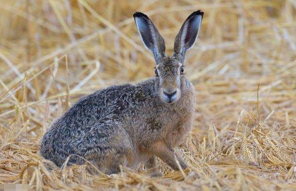 """生肖兔""""过了45岁,一定要花几分钟好好看看,下半辈子依靠谁?"""