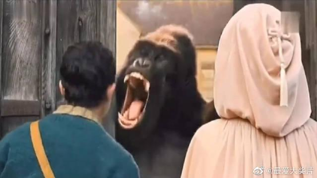 这只猩猩承包了所有笑点!《多利特的奇幻冒险》