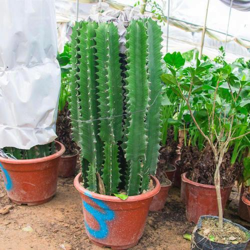 两种奇葩绿植,很多人没养过,耐晒又好养,给点阳光就窜个