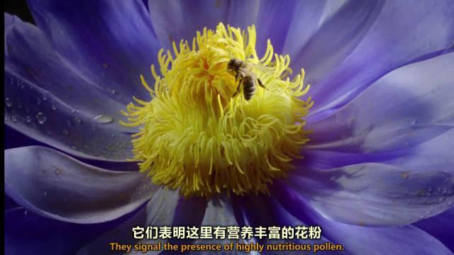 花朵与昆虫间的默契约定俗成!不需要协议的盟约有时也值得信任!