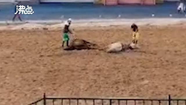 河北承德景区表演时两匹马迎面相撞演员瞬间飞出马匹倒地不起