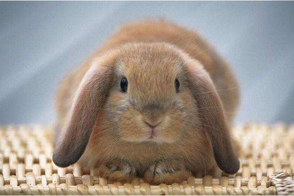 """算命大师:未来10年,生肖兔要想发家致富,就看一个""""贵人""""!"""