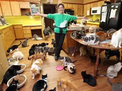 美国老太癖好收养猫咪, 390平房子养1100只猫, 猫奴第一人