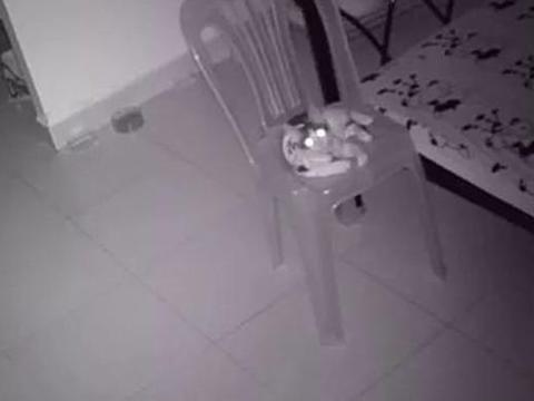 男子为观察留守猫咪,特地装了摄像头,调出监控后心却被暖到了