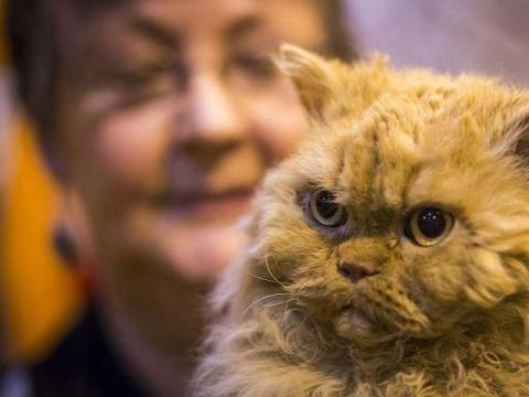 世界爱猫日来临,看一看,萌萌小喵绝对治愈系!