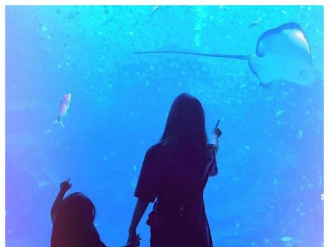 昆凌晒照,和女儿儿子一同游海洋馆,小周周的腿快长到屏幕外了