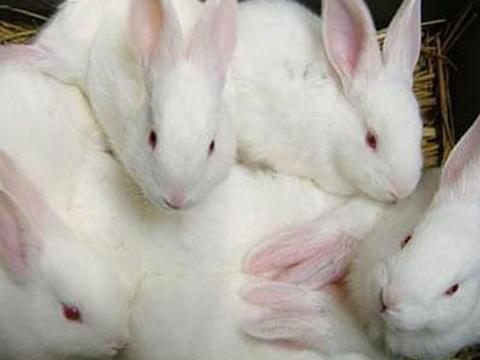 """风水轮流转,8月一到鸿运当头,""""兔兔""""的十年愿望终于圆满!"""
