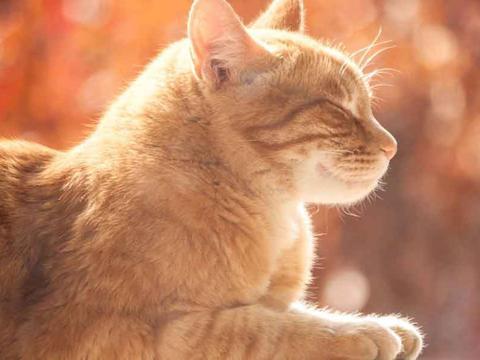 一个对猫过敏的人,是不是也会对狮子和老虎过敏?
