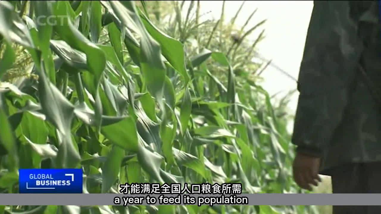 今年全国夏粮产量承压 但因单产提高使得粮食总产量稳中有升