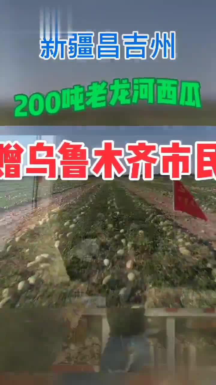 乌昌情深!昌吉州200吨老龙河西瓜赠给乌鲁木齐兄弟姐妹