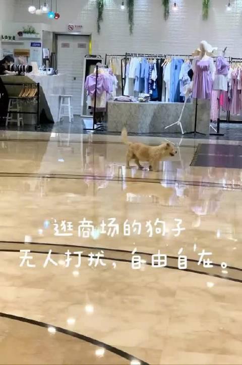 商场看到暖心的一幕,最美的样子就是人与动物和谐共处