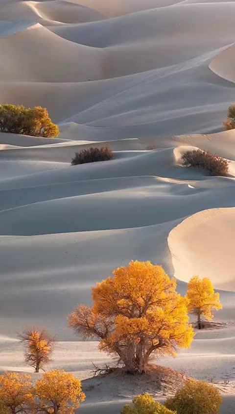 沙漠美景,美的就像一副世外桃源,太美啦!