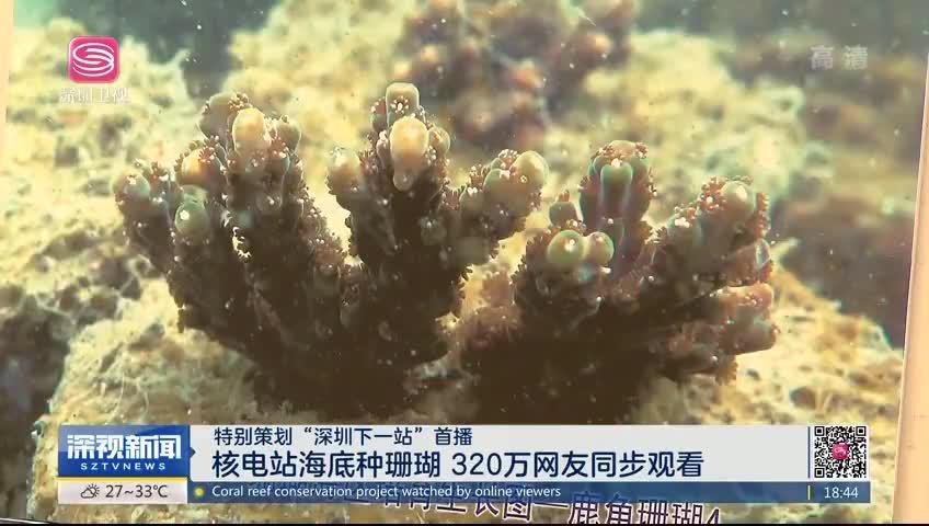 """特别策划""""深圳下一站""""首播 核电站海底种珊瑚 320万网友同步观看"""