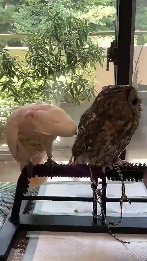 猫头鹰:摸就摸,你掀我裙子干啥